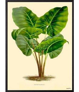 Vanilla Fly Poster | GREEN PLANT | 30x40cm