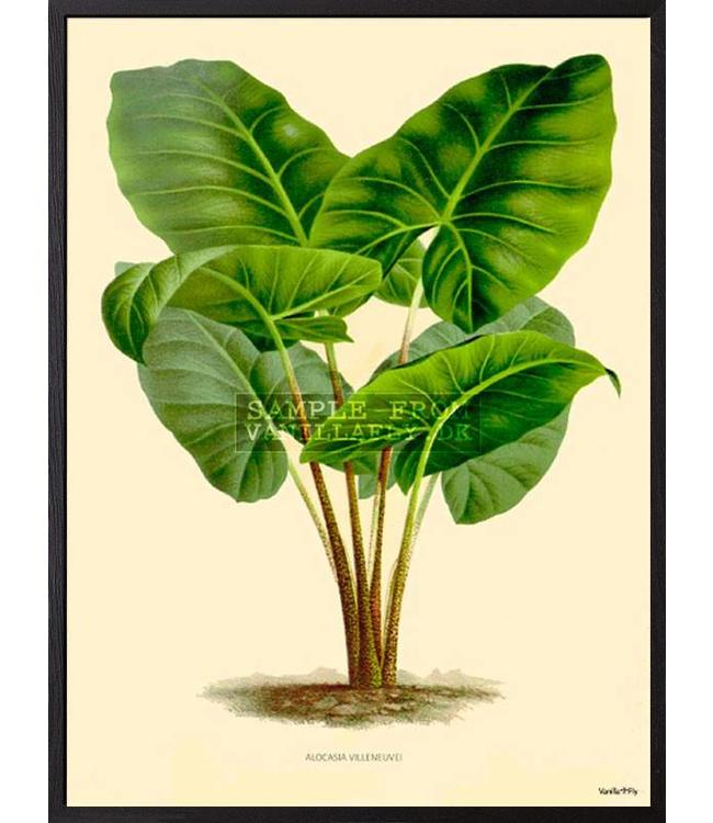 Vanilla Fly Print | GREEN PLANT | 30x40cm
