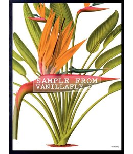Vanilla Fly Poster | RED PALM TREE | 20x25