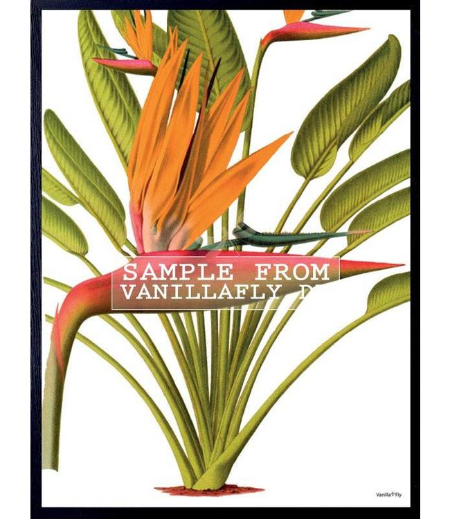 Vanilla Fly Print | RED PALM TREE | 20x25