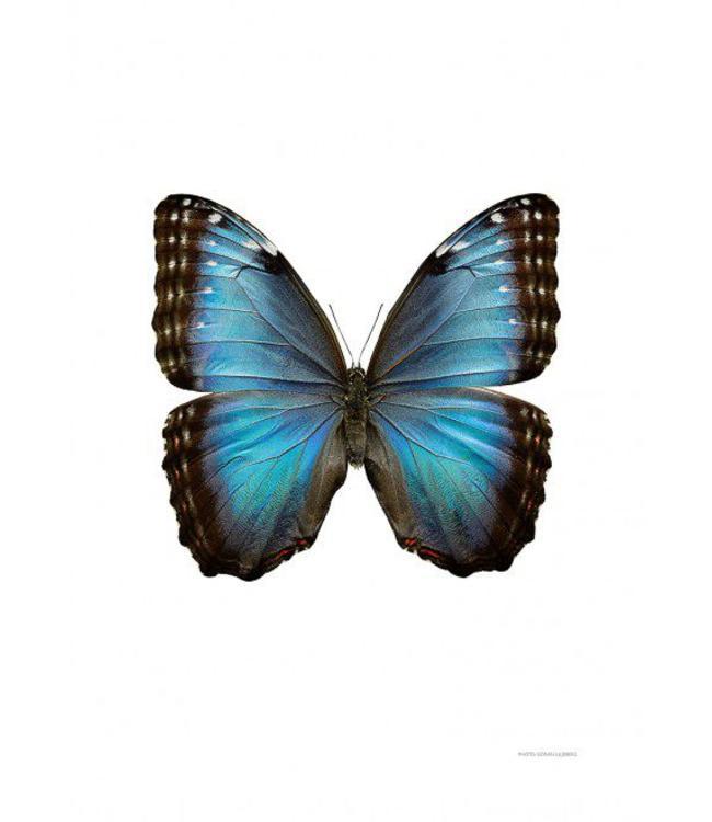 Liljebergs Macrofoto Poster | Vlinder