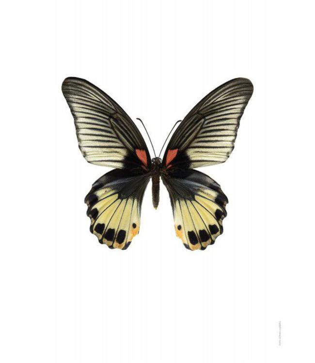 Liljebergs Macrofoto Poster | Vlinder Papilio memnon