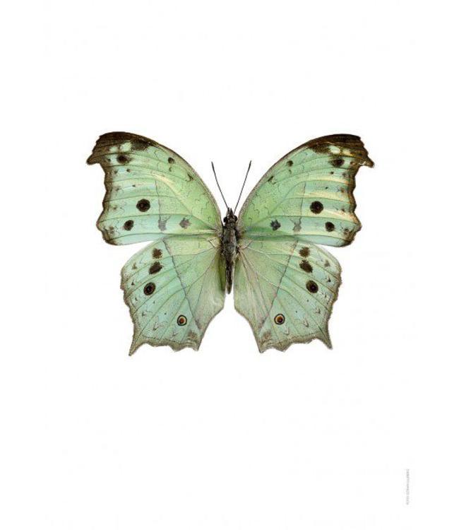 Liljebergs Macrofoto Poster | Vlinder Salamis parhassus