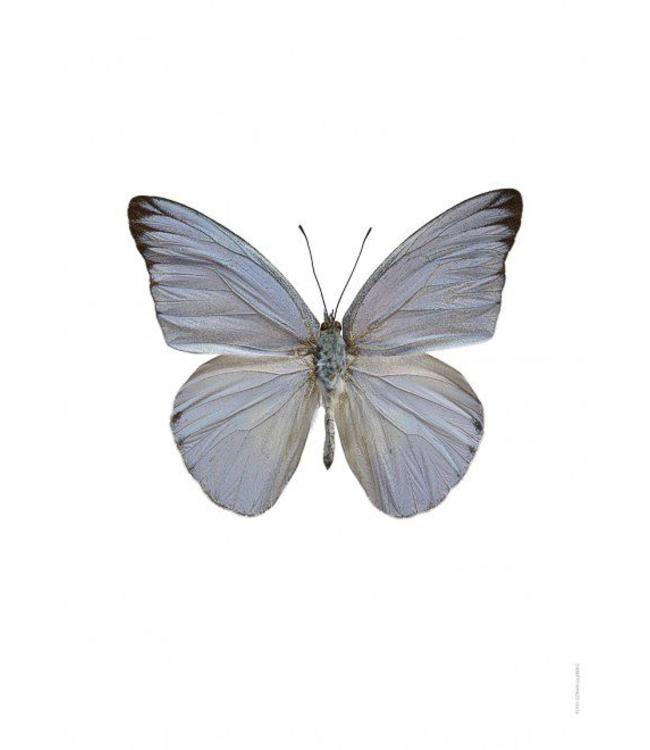 Liljebergs Macrofoto Poster | Vlinder Appias celestina
