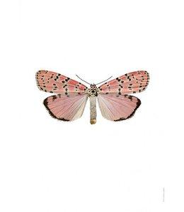 Liljebergs Foto Nachtvlinder | 30x40 cm | Utethesia ornatrix