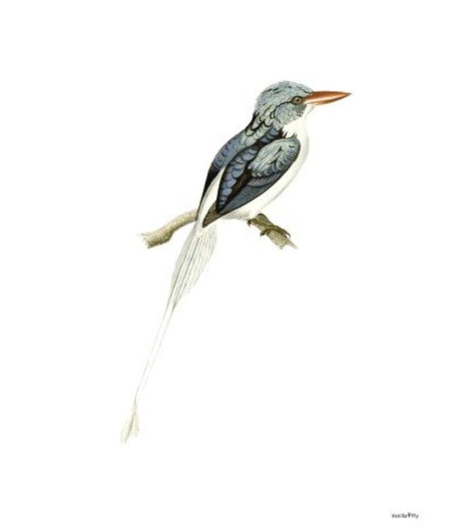 Vanilla Fly Print | BLUE BIRD | 20x25cm