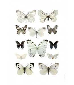 Liljebergs Macrofoto Poster | Vlinders Zwart Wit | 50x70 cm