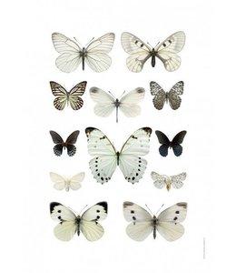 Liljebergs Macrofoto Print | 50x70 cm | Butterflies Black and white