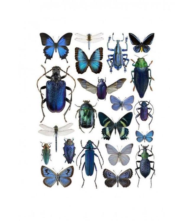 Liljebergs Macrofoto Poster | Vlinders en kevers