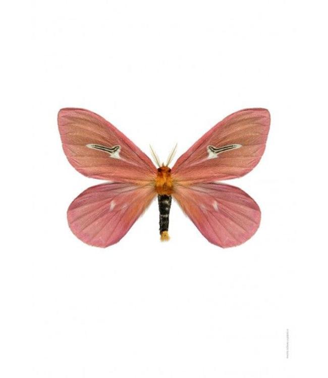 Liljebergs Macrofoto Poster | Vlinder Cerodirphia apunctata