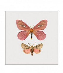Liljebergs Photo Print Moth in frame | 15x15 cm |