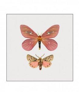Liljebergs Photo Print Moth in frame | 15x15 cm |