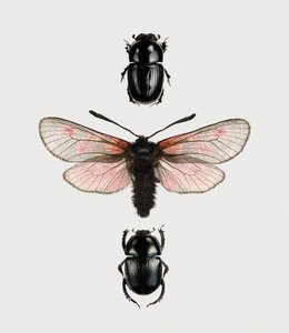 Liljebergs Photo Print Beetles in frame | A5