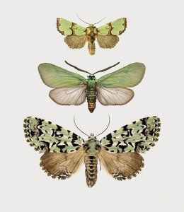 Liljebergs Fotoprint Vlinders | A5 | in lijst