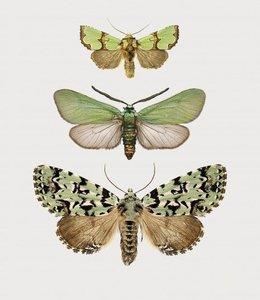 Liljebergs Photo Print Moth in frame | A5