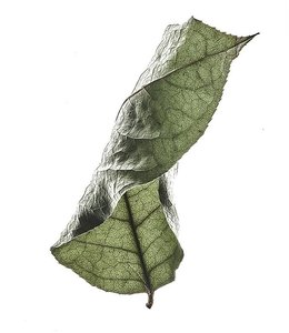 Moebe Floating Leaves A4