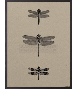 Vanilla Fly Poster | 3 DRAGONFLIES | 20x25 cm