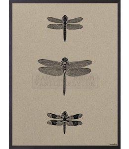 Vanilla Fly Poster | 3 DRAGONFLIES | 20x25