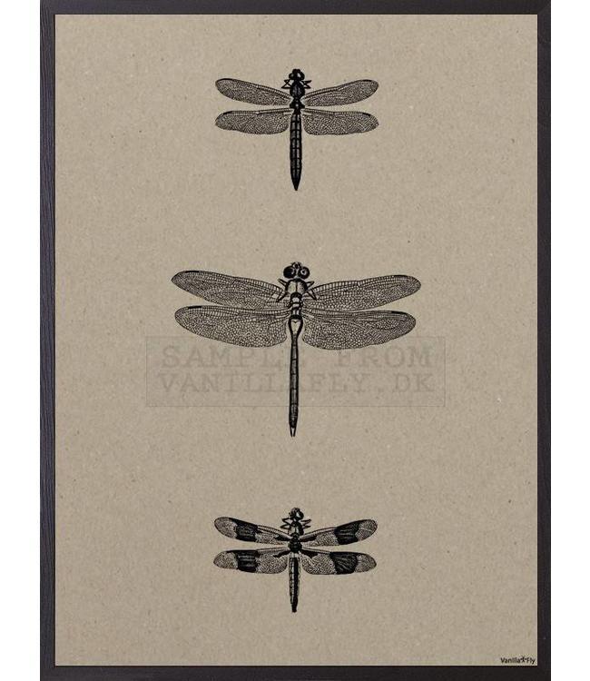 Vanilla Fly Print | 3 DRAGONFLIES | 20x25