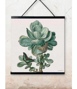 Vanilla Fly Poster | SUCCULENT | 50x50cm