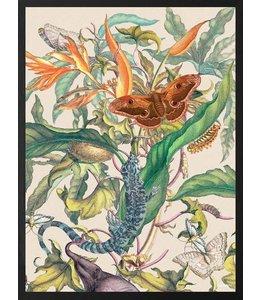 Vanilla Fly Poster Pelican Mimosa | 30x40 - Copy
