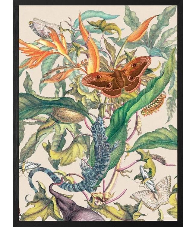 Vanilla Fly Poster | Pelican Mimosa | 30x40 - Copy