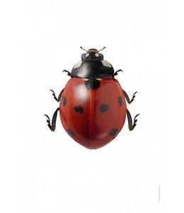 Liljebergs Macrofoto Lieveheersbeestje | A4