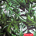 Tricot Botanical