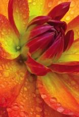 Aubrey Organics Aubrey Insel Naturals Conditioner