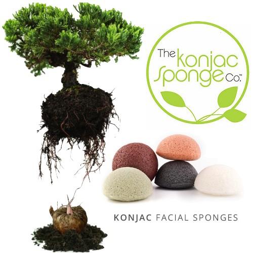 Konjac Sponge Konjac Sponge Premium Gentlemen's Sponge Bamboo Charcoal