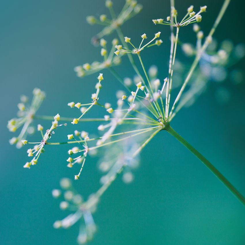 Aubrey Organics Aubrey Organics Skin Therapy Beruhigende Feuchtigkeitspflege