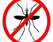 Insekten Beste Reiding