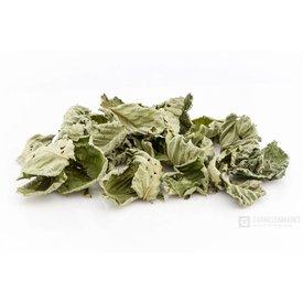 Garnelenmarkt Haselnussblätter, grün getrocknet