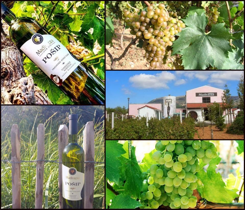 Wijnweetje van de week de bijzondere autochtone dalmatische druif po ip - Witte salontafel thuisbasis van de wereldberoemde ...
