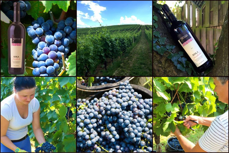 Wijnweetje van de week: de Kroatische Frankovka is de gezondste rode wijn