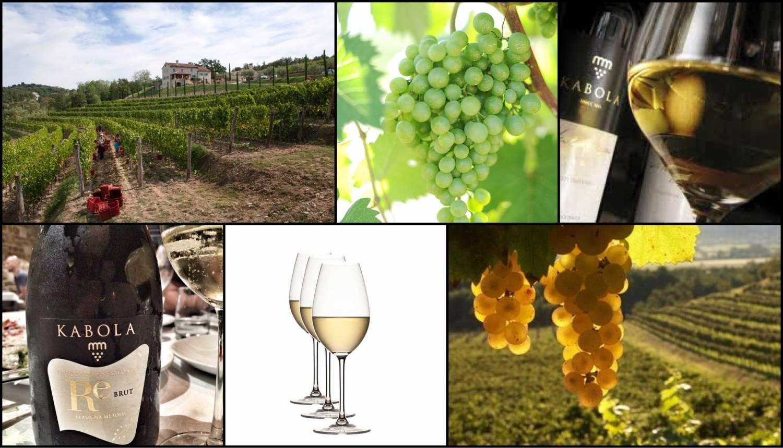 Wijnweetje van de week: De beroemde druif Istarska Malvazija