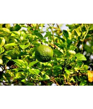 Curacao Liqueur Orange 50ml