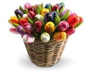 Tulpen aus Holz in einem Korb