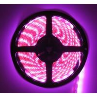 LEDStrip Roze 1 Meter 60 LED per meter 12 Volt