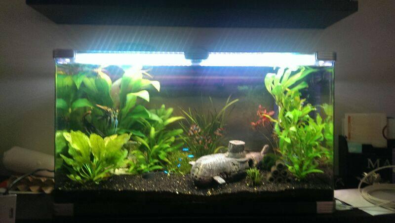 LEDStrip in aquarium 6