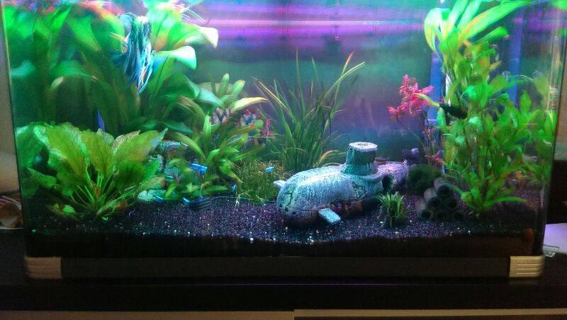 LEDStrip in aquarium 9