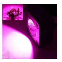 EPILEDS 75 Watt COB LED kweek lamp