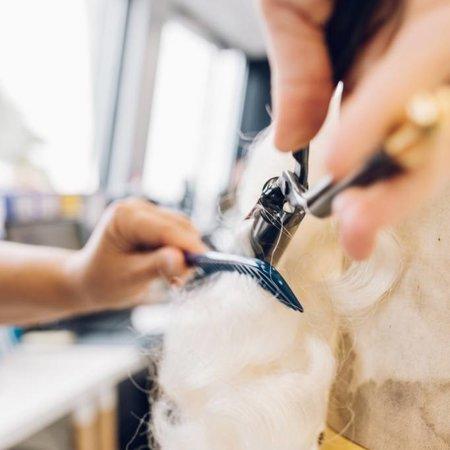 Eigen atelier Bijwerken baardstel