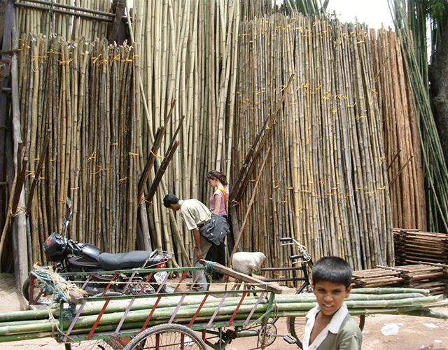 Een bamboewoud herstelt zichzelf na de oogst en groeit tot een volwassen staat in 5-7 jaar t.o.v. 10-20 jaar voor de meeste zachte houtsoorten.