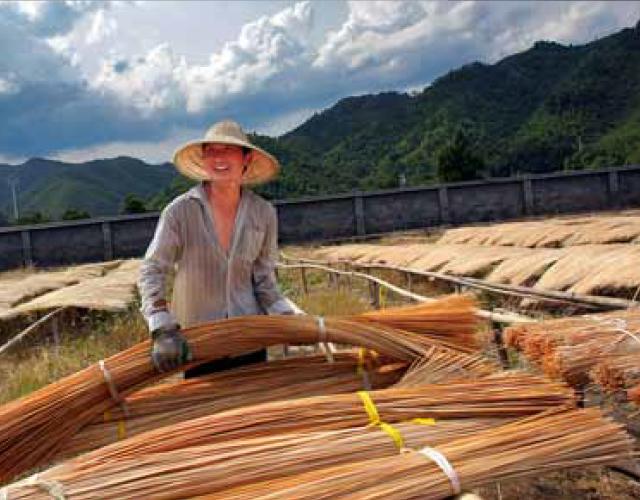Bamboe is een grassoort dat sterker is dan hardhout. De plant groeit tot 50 cm per dag en is hiermee duurzaam in gebruik.