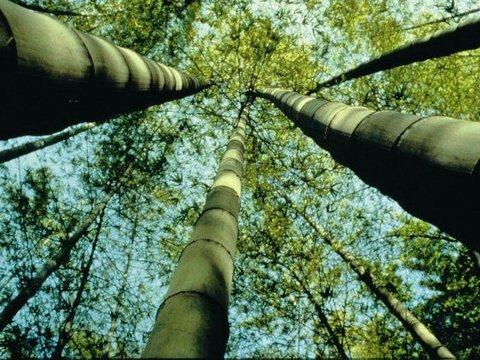 Geen gedoe maak het gewoon met bamboe