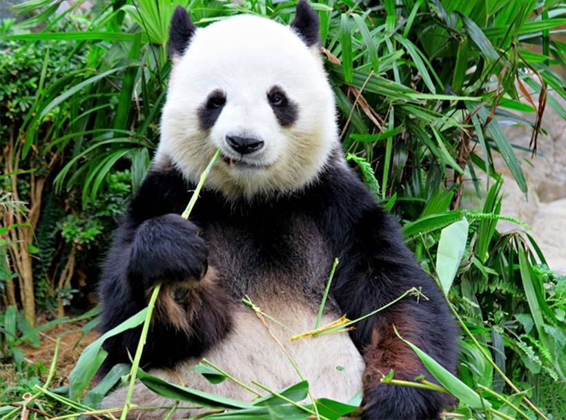 Bamboe voeren? Bamboe vloeren!