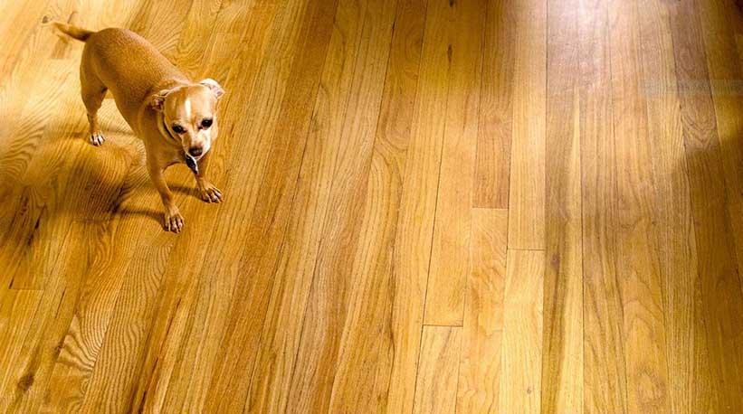 Bamboe Vloer Nadelen : Vloeren en huisdieren debamboehut de bamboe hut