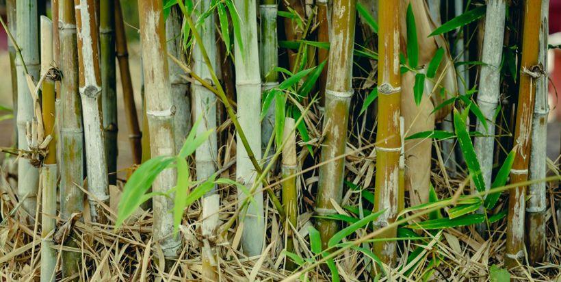 Waar komt een bamboe vloer van De Bamboe Hut vandaan?