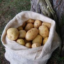 Nutscene Nutscene Kartoffelsack - 2er Pack